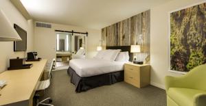 Hotel Paradox King Room Shot